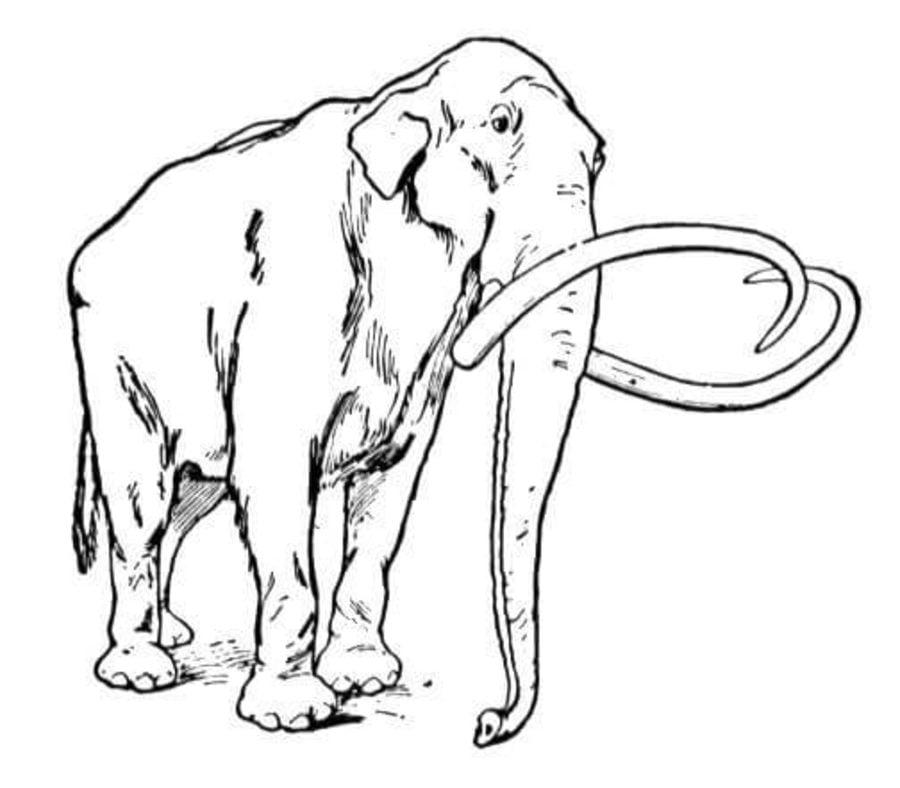 ausmalbilder ausmalbilder mammut zum ausdrucken