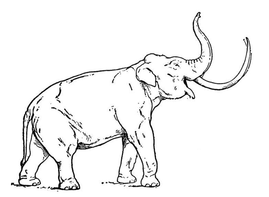 Mammoth coloring and printable page | Coloring pages | 662x900