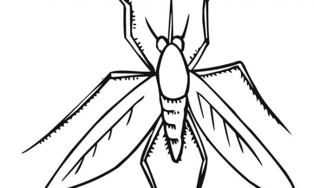 Mosquito coloring page - Animals Town - animals color sheet ... | 376x627