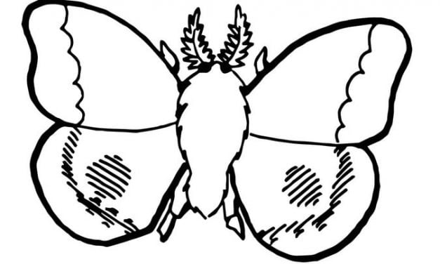 Coloring pages: Moth
