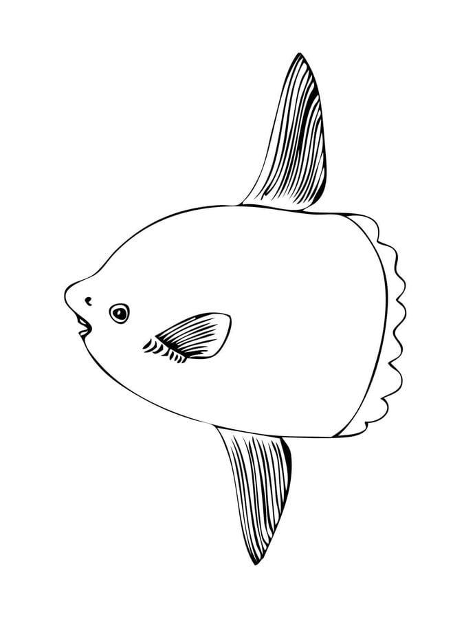 ausmalbilder ausmalbilder mondfisch zum ausdrucken