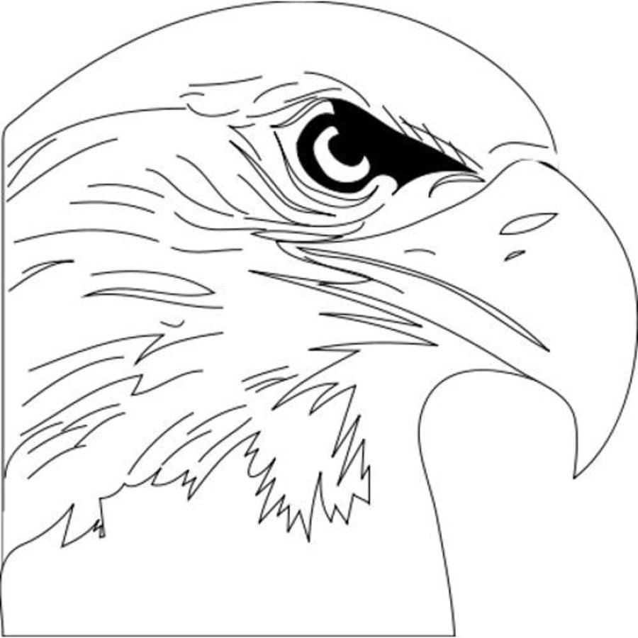 Osprey Coloring Pages Sketch Coloring