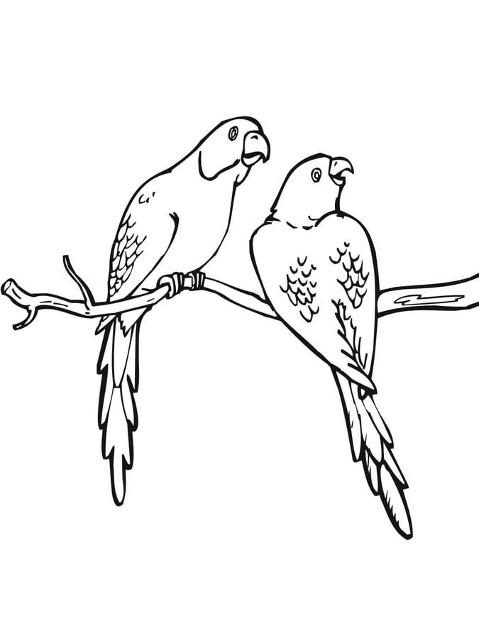 Coloring pages Coloring pages Parakeet printable for