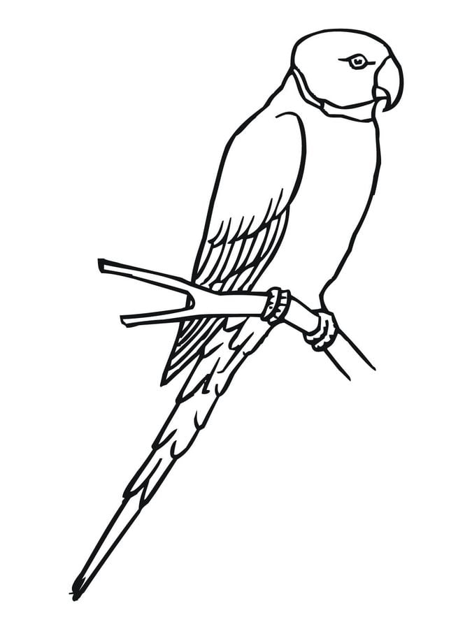 Coloring pages coloring pages parakeet printable for - Coloriage perruche ...
