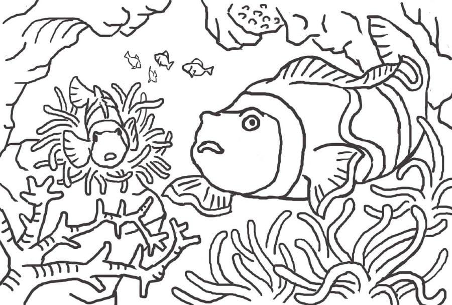Dibujos para colorear Pez coral imprimible gratis para los