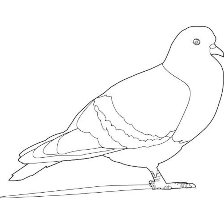 Ausmalbilder: Taube zum ausdrucken, kostenlos, für Kinder und Erwachsene