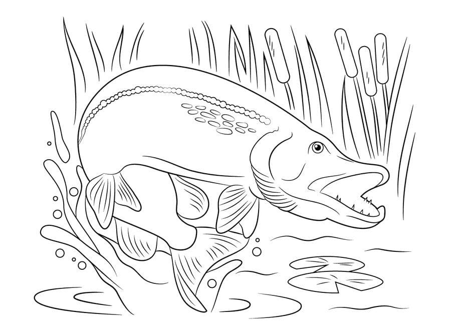 Malvorlagen Fische Hecht | My blog