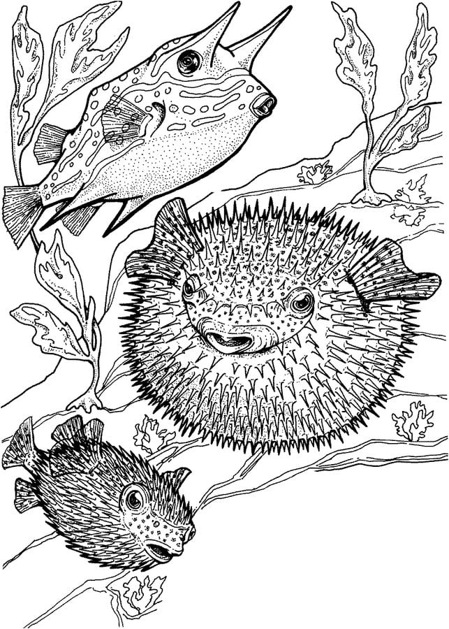 Printable Funny Puffer Fish coloring page for both aldults and kids. | 900x643