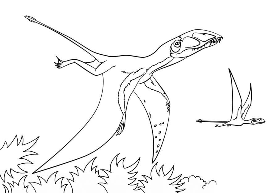 dibujos para colorear pterodáctilo imprimible gratis