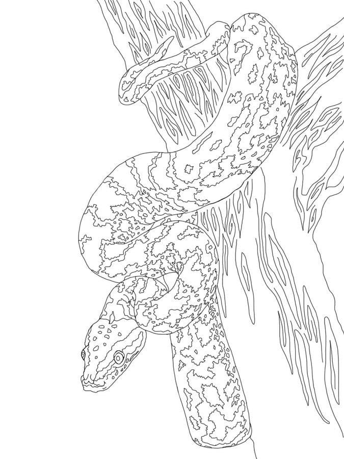 ausmalbilder  ausmalbilder  python zum ausdrucken