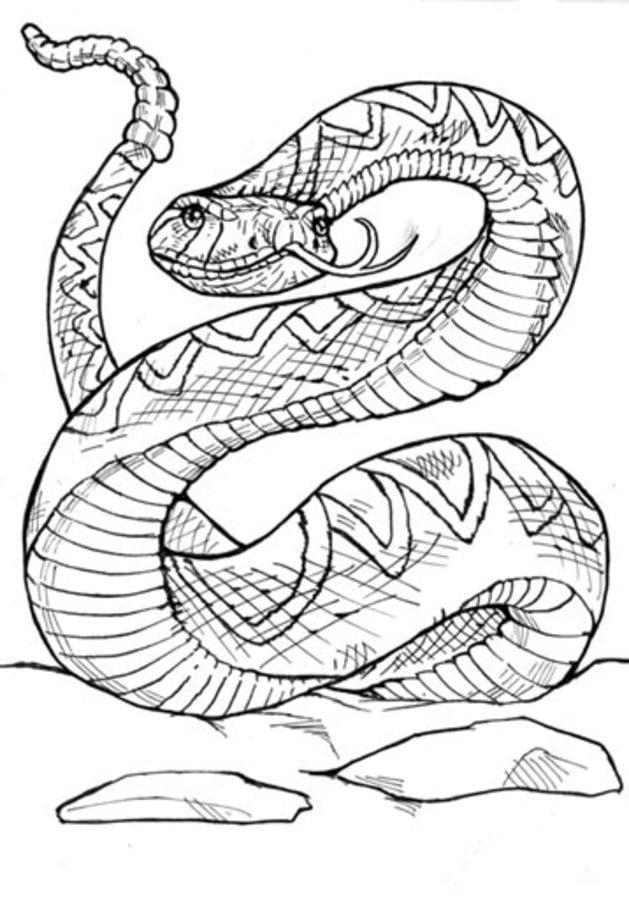 Disegni Da Colorare Disegni Da Colorare Serpente A Sonagli