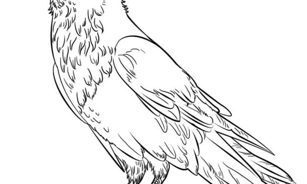 Coloring pages: Ravens