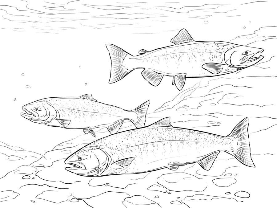 Disegni da colorare disegni da colorare salmone for Pesci da stampare e colorare
