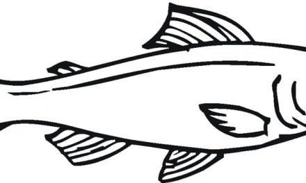 Ausmalbilder: Lachs