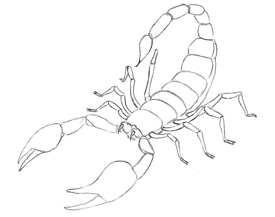 Dibujos para colorear Escorpiones imprimible gratis para los