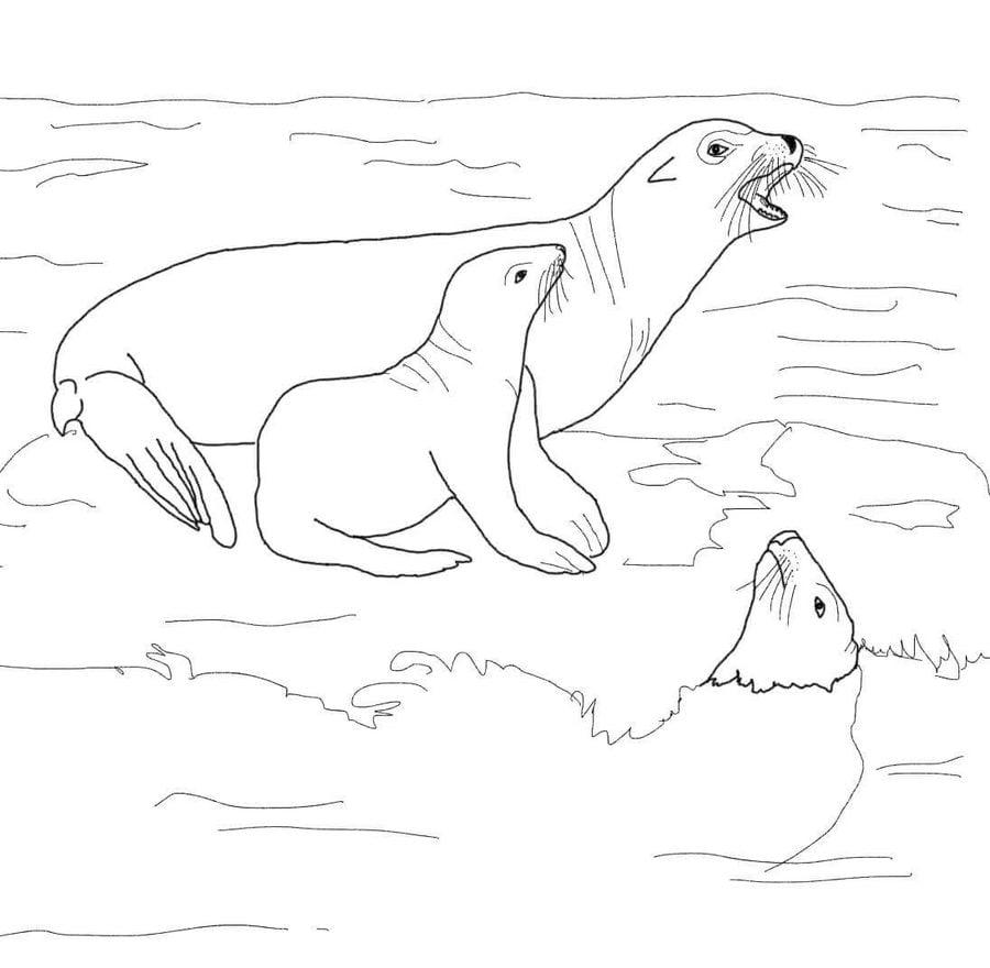 подпиши рисунки тюлень на льдине