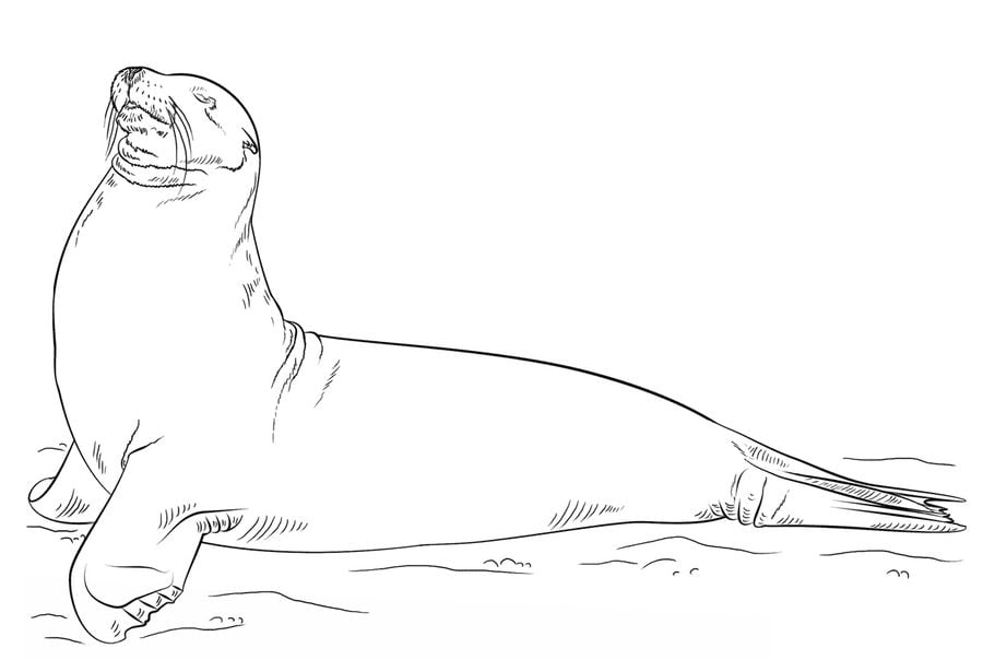 Coloring pages Coloring pages Sea lions printable for