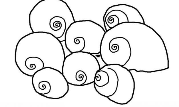 Ślimak morski
