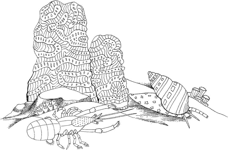 Coloring pages sea snail printable for kids adults free for Sea snail coloring page