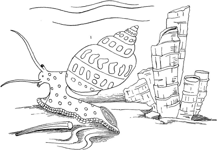 Disegni da colorare lumaca di mare stampabile gratuito for Sea snail coloring page