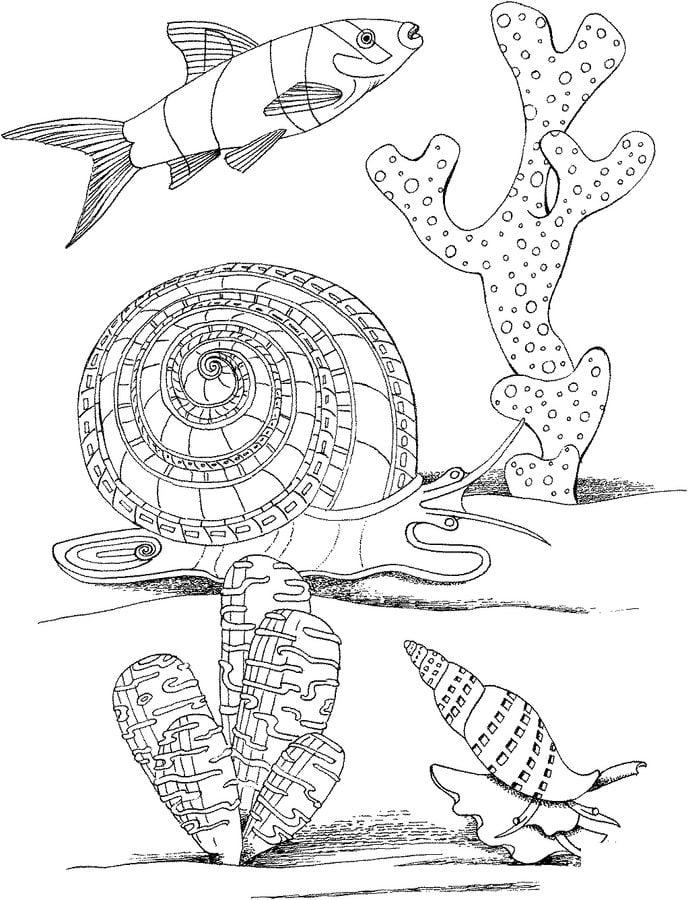 Kolorowanki limak morski do druku