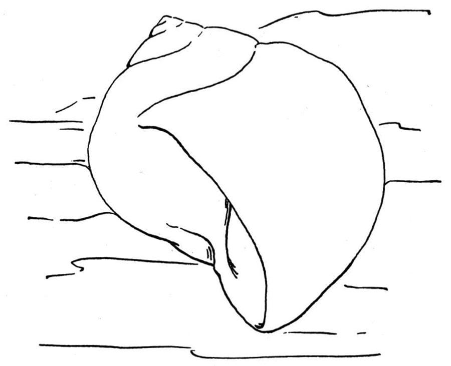 Dibujos para colorear: Caracol de mar imprimible, gratis, para los ...
