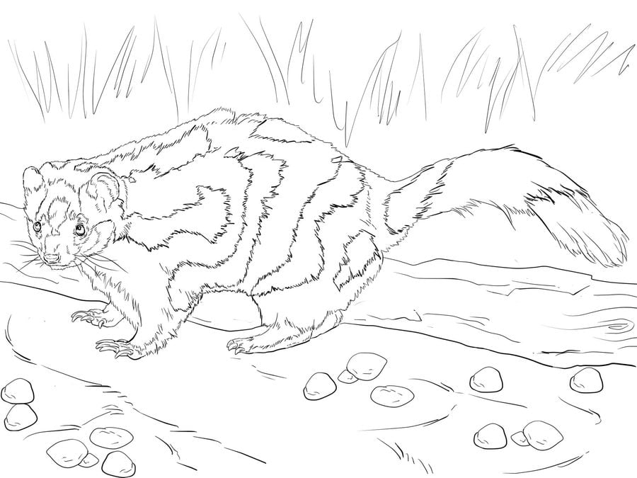 Bonito Skunk Para Colorear Imagen - Dibujos Para Colorear En Línea ...