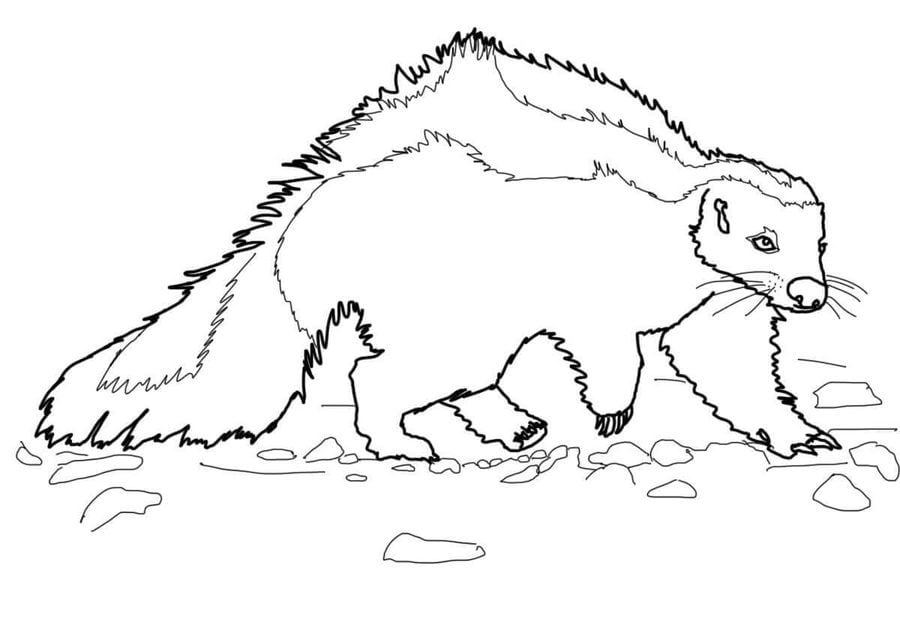 Skunk Coloring Pages | 640x900