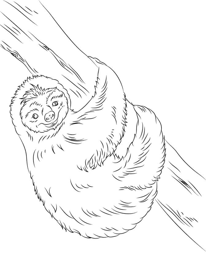 Coloring Page With Lovely Sloth In Forest. Stock Illustration ... | 900x671
