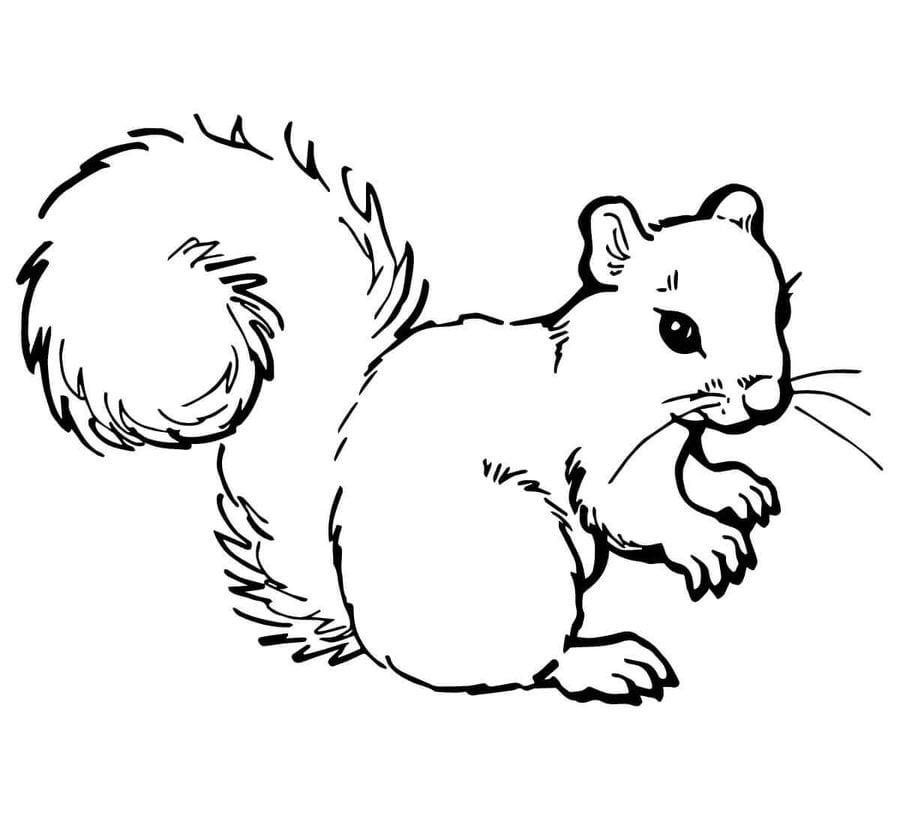 Ausmalbilder Ausmalbilder Eichhörnchen Zum Ausdrucken Kostenlos