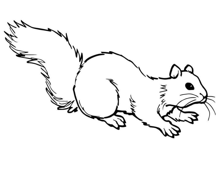 ausmalbilder: ausmalbilder: eichhörnchen zum ausdrucken