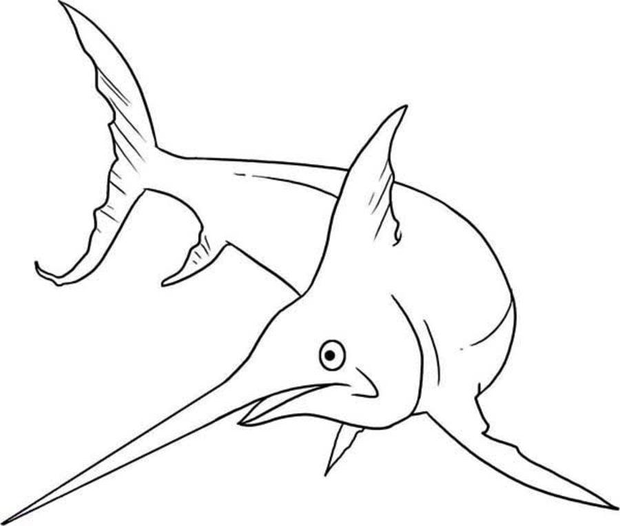 disegni da colorare disegni da colorare pescespada