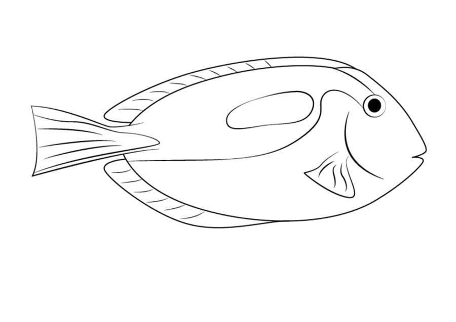 Dibujos para colorear peces cirujano imprimible gratis for Immagini di pesci da disegnare