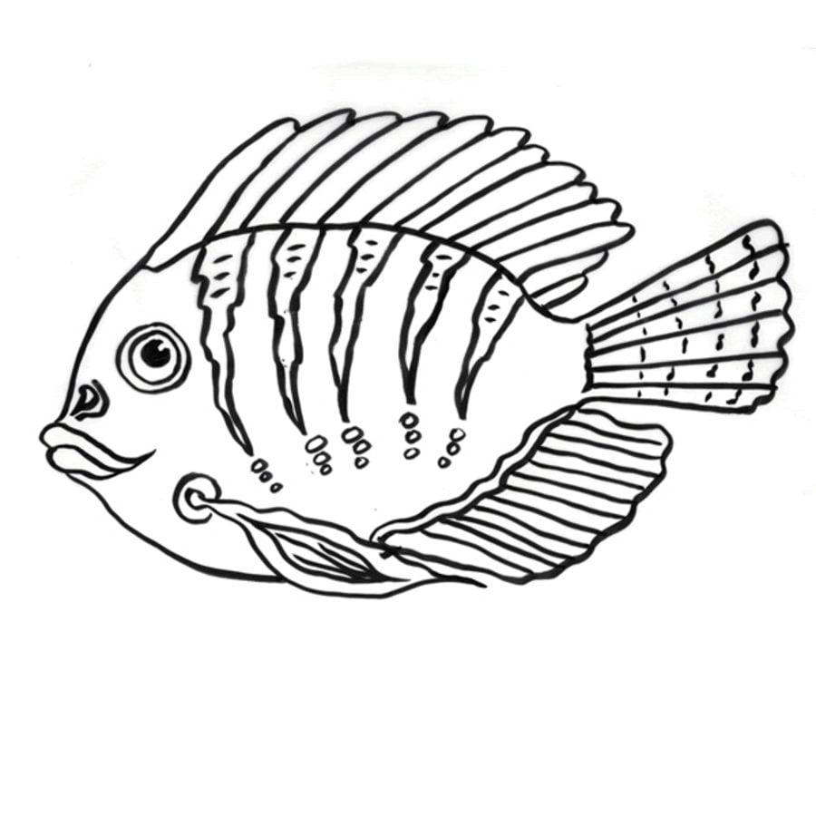 ausmalbilder doktorfische zum ausdrucken kostenlos für