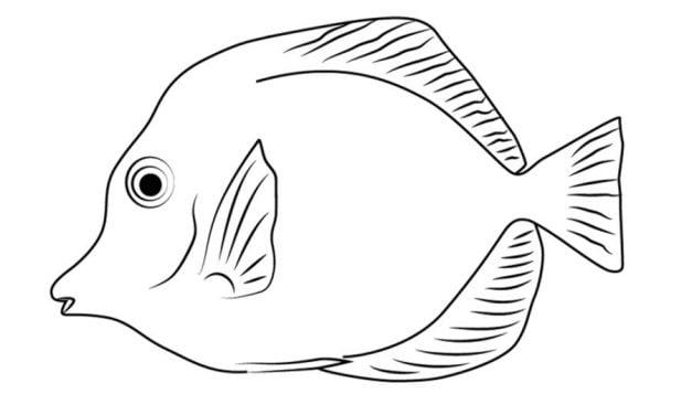 dibujos de tuna para colorear