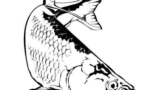 Coloring pages: Tarpon