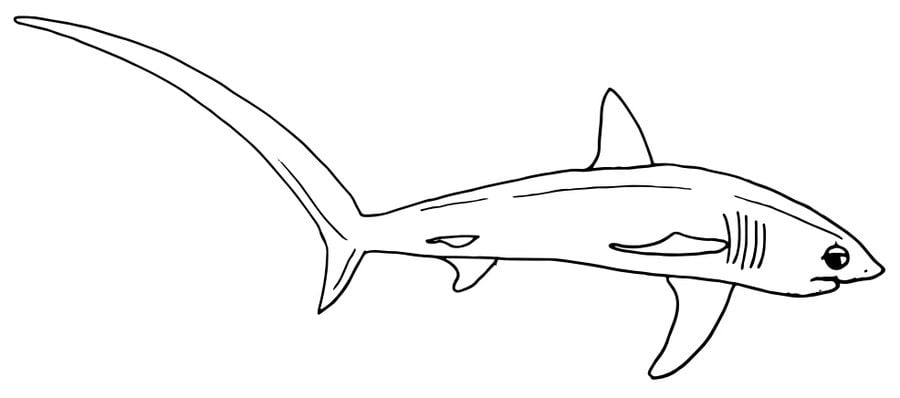 Coloring pages Thresher shark printable for kids