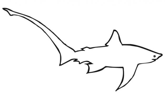 Coloring pages: Thresher shark