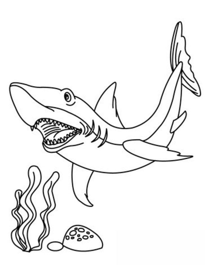 Wunderbar Malvorlagen Von Tigerhaien Ideen - Ideen färben - blsbooks.com