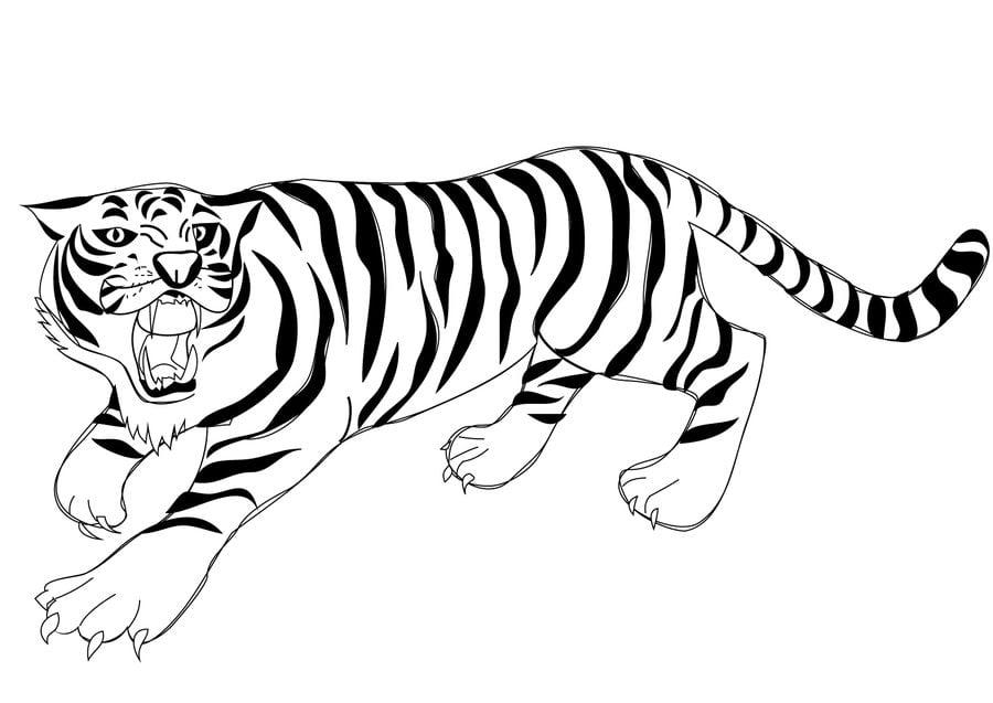 ausmalbilder: tiger zum ausdrucken, kostenlos, für kinder