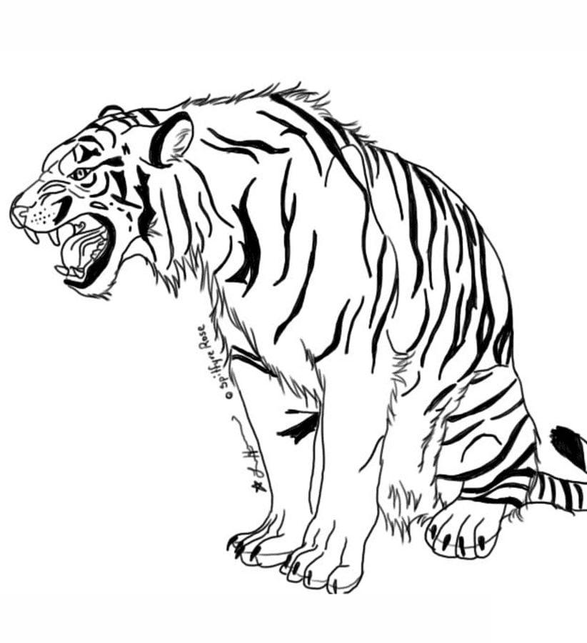 Disegni da colorare tigri stampabile gratuito per for Disegni di tigri da colorare