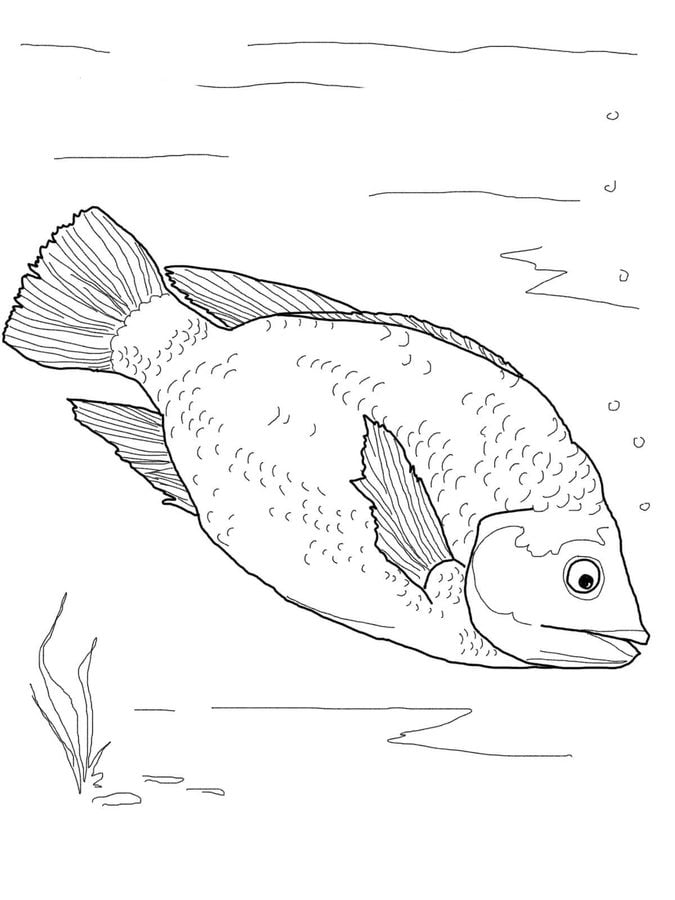 Coloring pages: Coloring pages: Triggerfish, printable for kids ... | 900x675