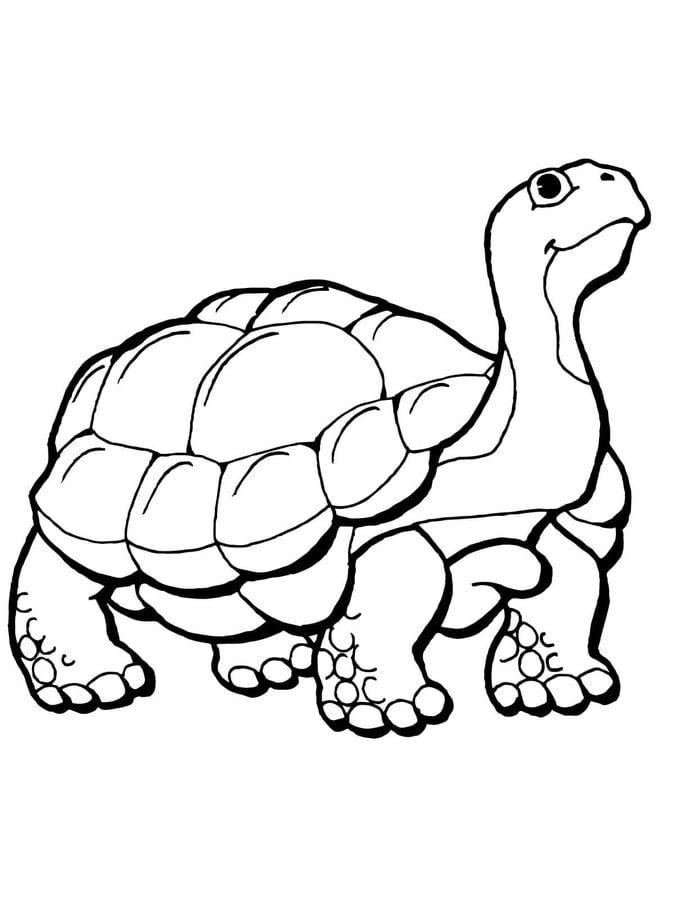 ausmalbilder ausmalbilder schildkröte zum ausdrucken