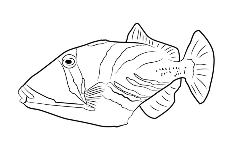 Triggerfish Animals Coloring Pages Fish