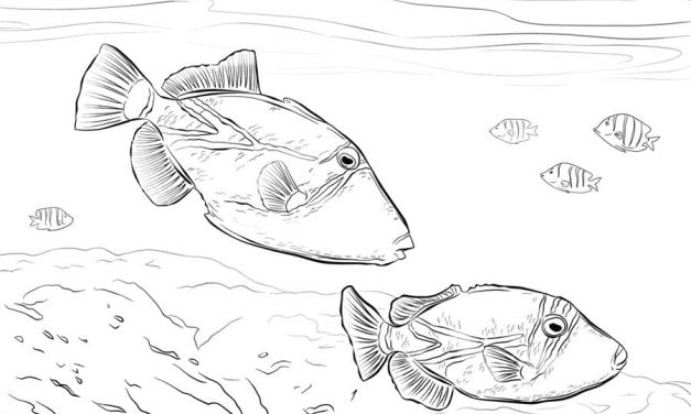 Coloring pages: Triggerfish
