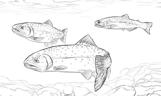 Coloring pages: Trouts