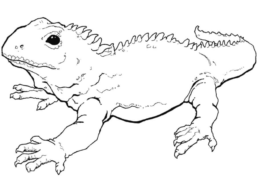 Animals, Coloring Pages, Reptiles | 0 |. Tuatara