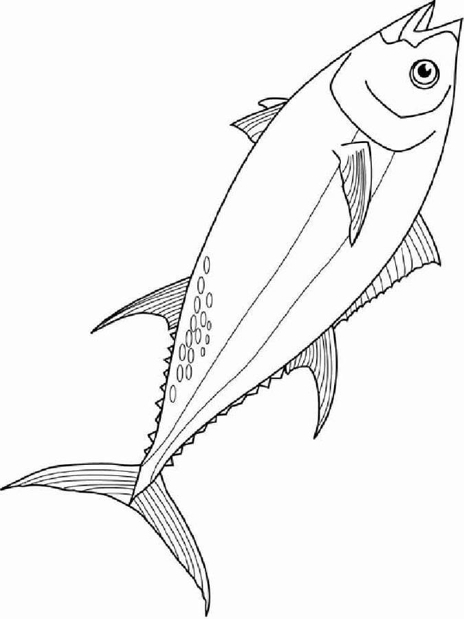 Disegni da colorare tonno stampabile gratuito per for Tuna fish coloring page