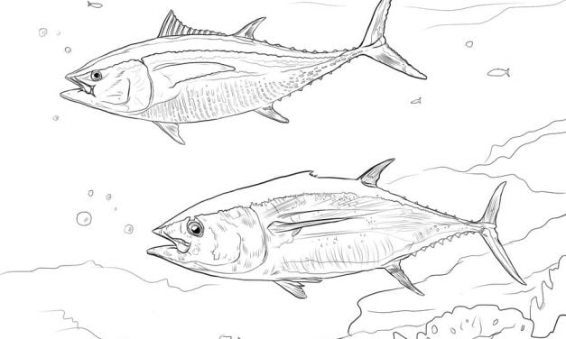 Coloring pages: Tuna