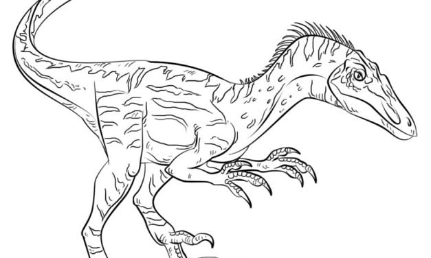Coloring pages: Velociraptor